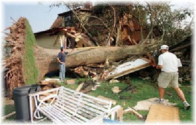 hurricane tree damaged and removed